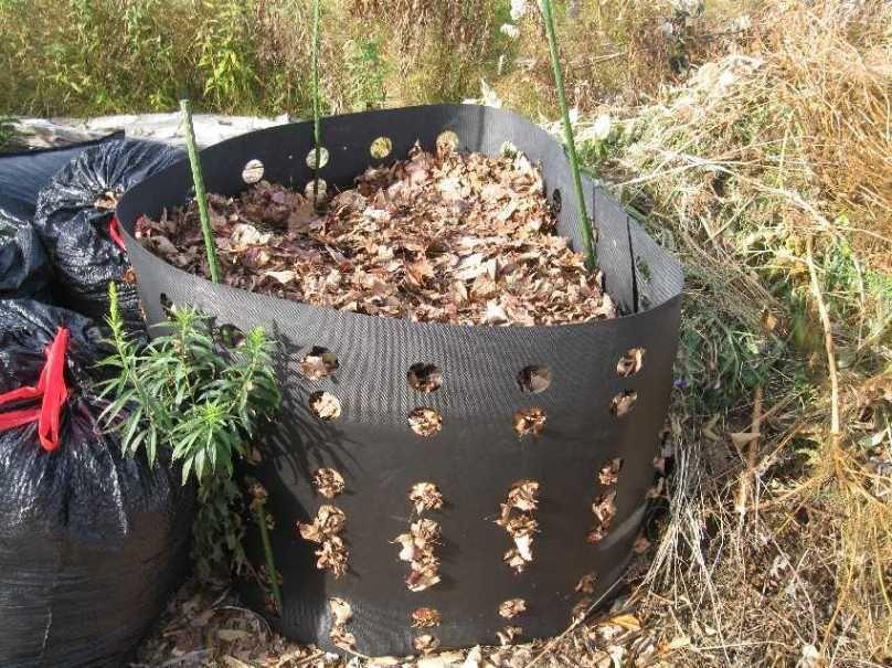 compost-leaf-